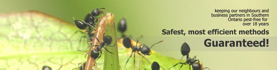 banner-ants