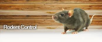 rodents-control